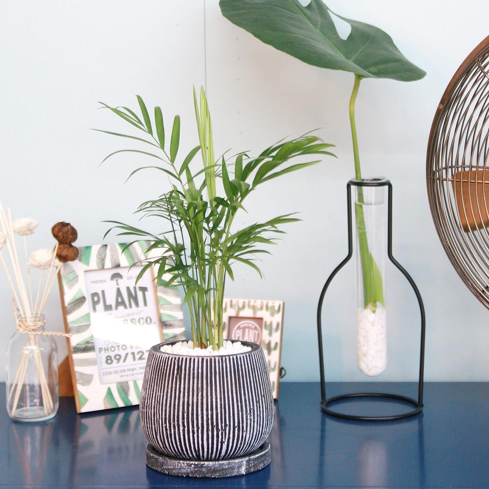 테이블 야자 엔틱 화분 공기정화식물