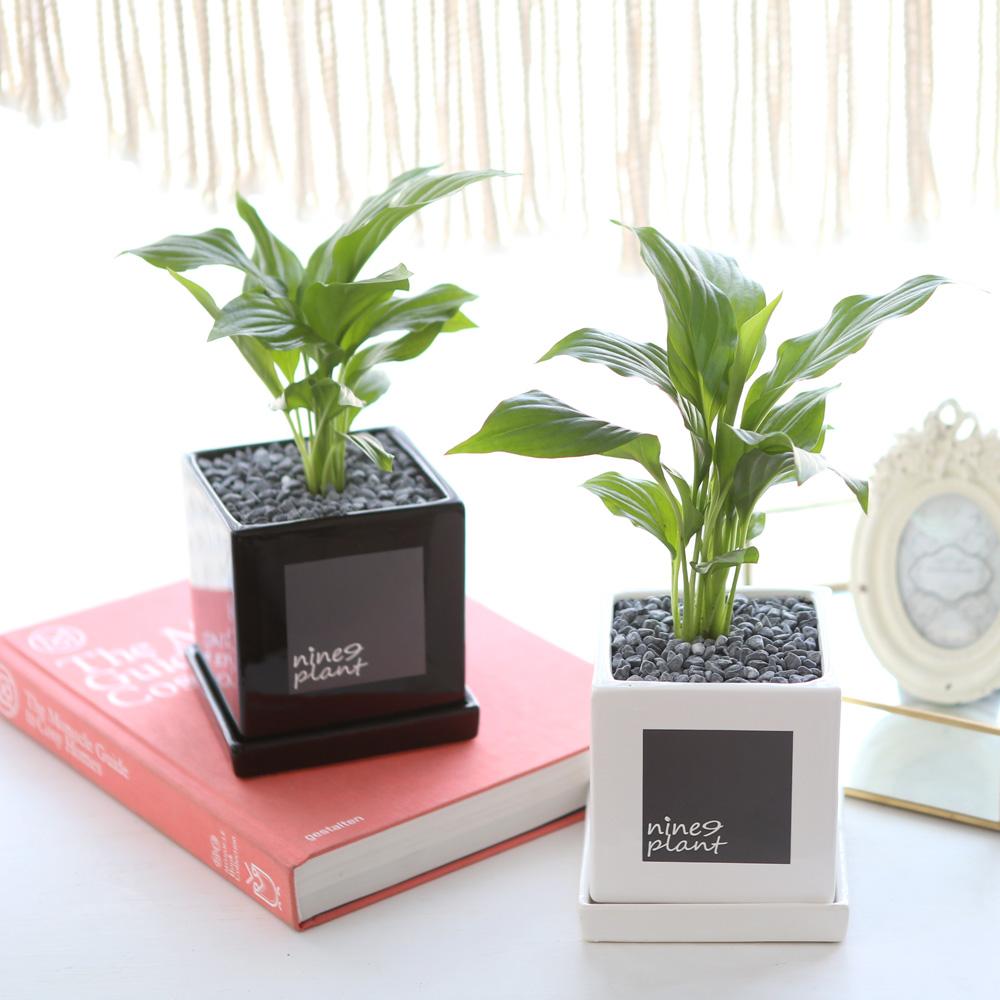 모던 화분 스파트필름 공기정화식물