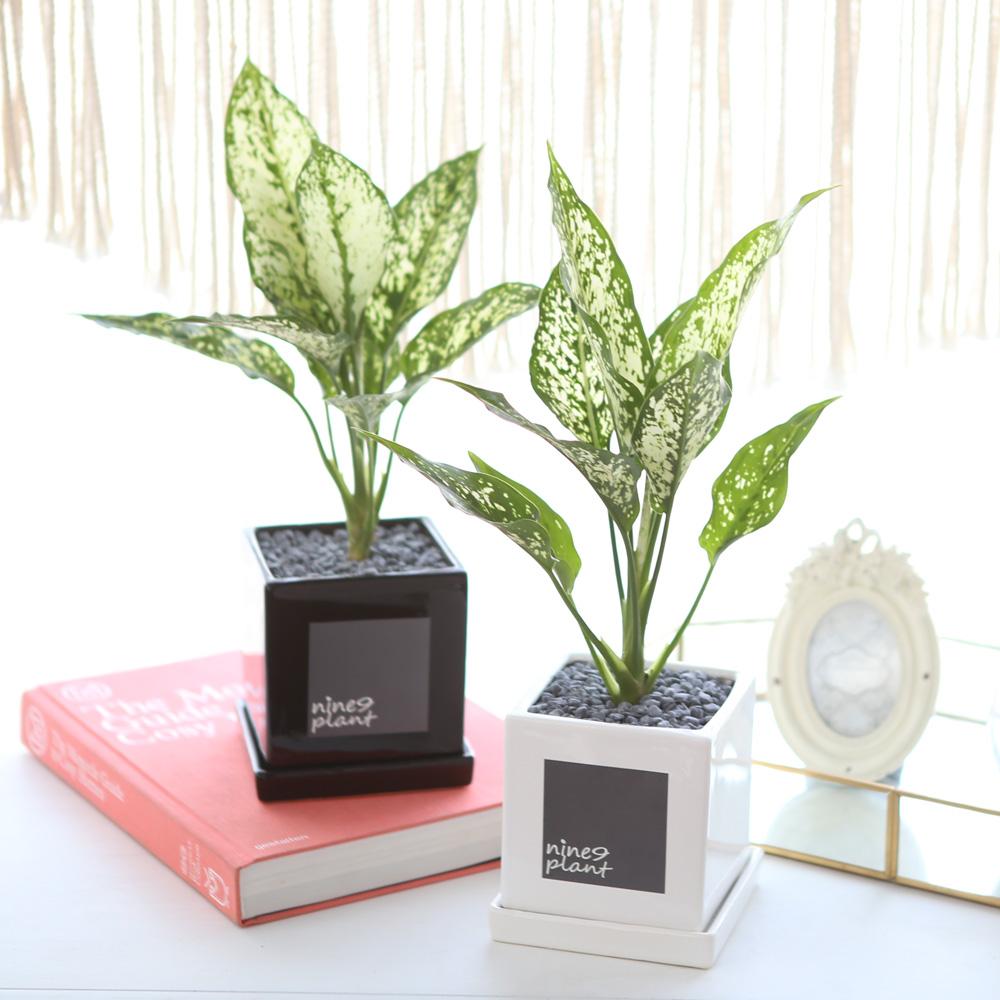 모던 화분 사파이어 공기정화식물
