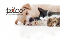 株式会社PECOのスピード成長中のITスタートアップ企業で働きたい学生募集【獣医学部生枠】のサムネイル画像