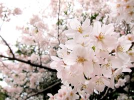 春インターンを徹底攻略!サマーインターンとの違いとは?のサムネイル画像