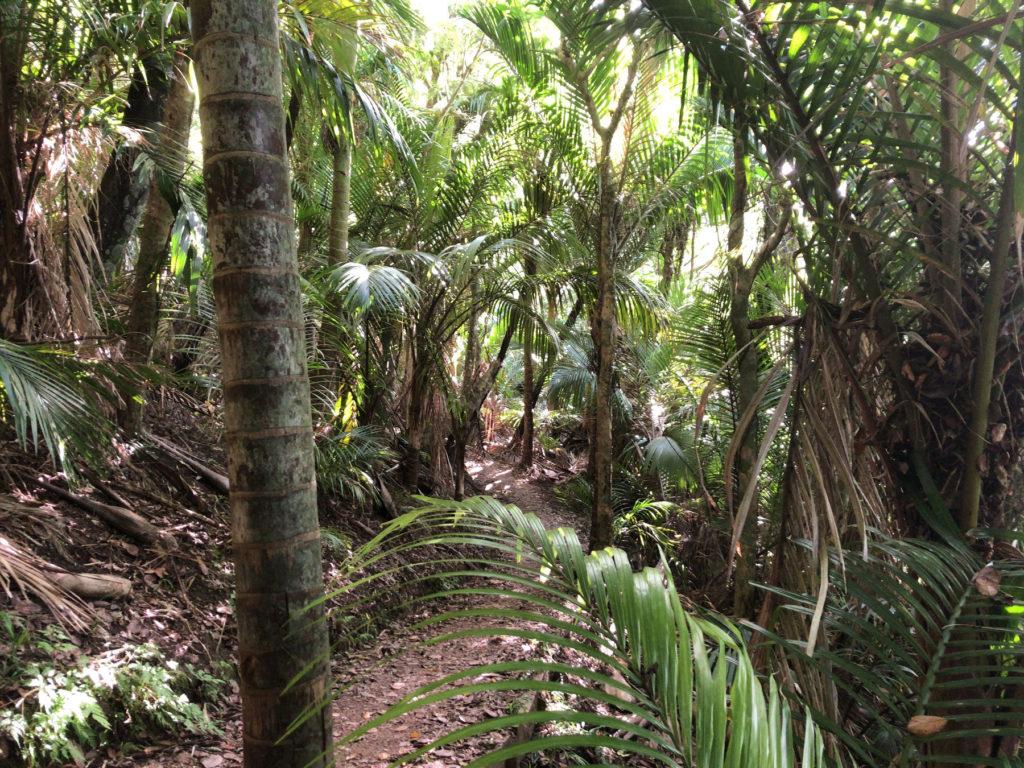 Waiheke Island walkways Walk6 はブッシュの中を行く
