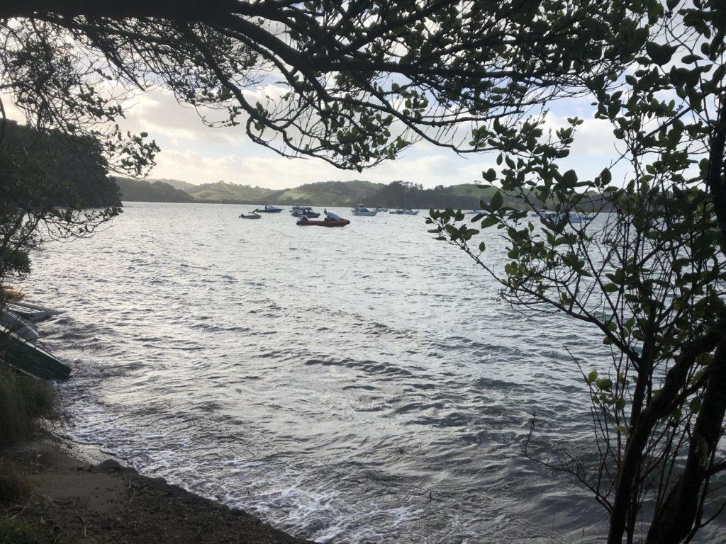 ブッシュから眺める海