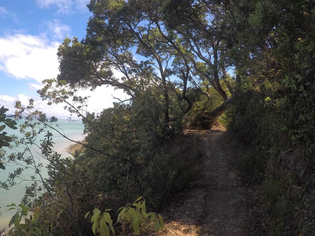 Waiheke Island walkways Walk 8