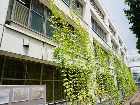 ミミズコンポストで作った堆肥を利用したホップのグリーンカーテン