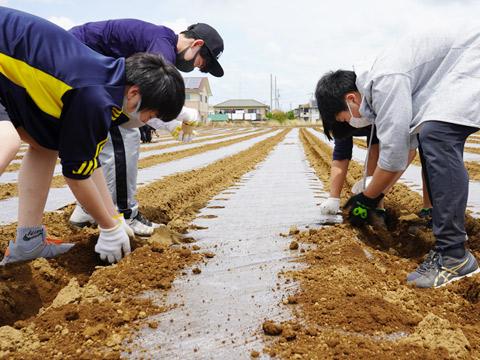 ピーナッツ畑で農業体験をしている生徒たち