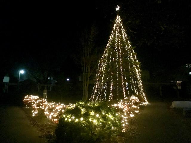 クリスマス 中学校の前にはクリスマスツリーが装飾されます