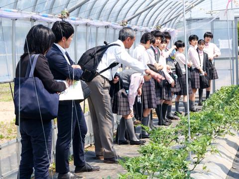 大学内のビニールハウスで野菜の育成について学ぶ生徒たち