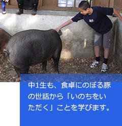 中1生も、食卓にのぼる豚の世話から「いのちをいただく」ことを学びます。