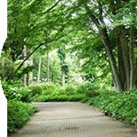 自由学園の広大な敷地はまるで森林公園のよう。公開行事は必見です。