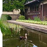 敷地内に点在する多数の池では、エビの希少な在来種が棲んでいるそうです。