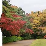 日本の四季を常に実感できる自然に囲まれた環境は、自由学園ならではの魅力です。