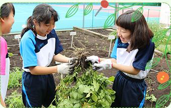 園芸での協働作業