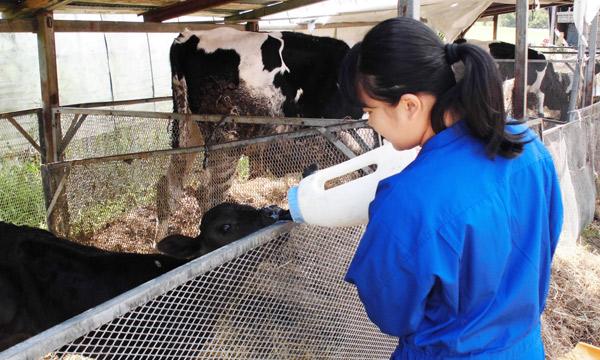 女子部(中3) 北海道 酪農体験