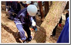 1人で木を切り倒す林業体験