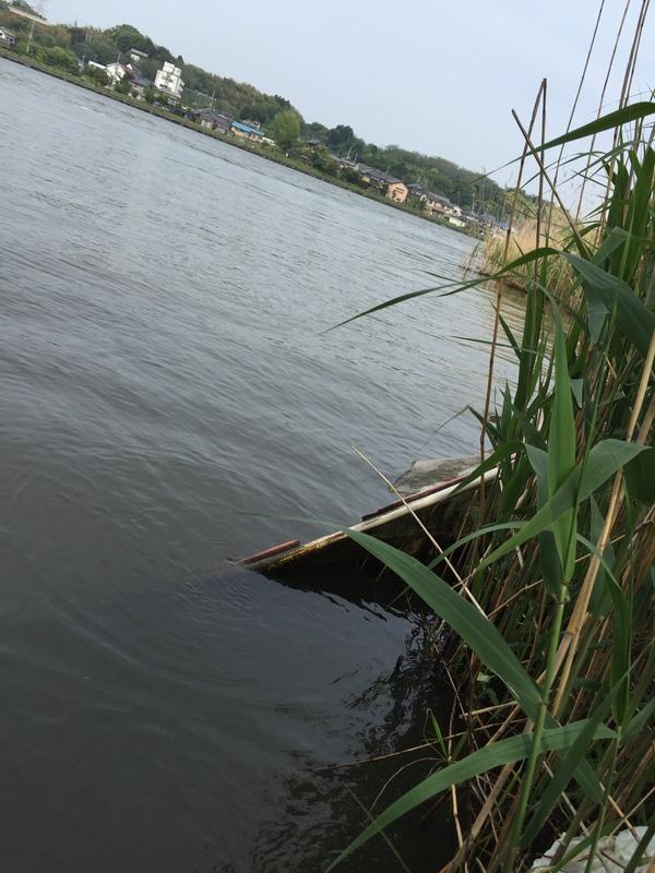 北利根川のオチビの画像