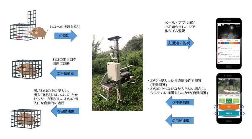 国見町とKDDI、イノシシ被害低減を目的としたIoT自動捕獲の実証実験を開始
