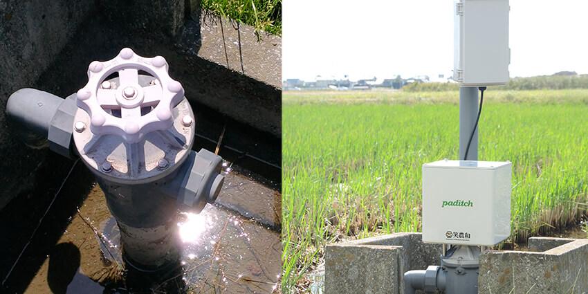 静岡の水田でセンサーと自動給水弁による遠隔の水位管理が実現