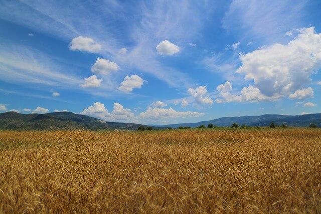 食品におけるトレーサビリティの重要性
