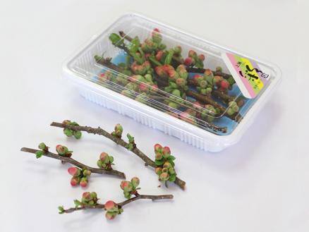 ぼけの花(200本入)