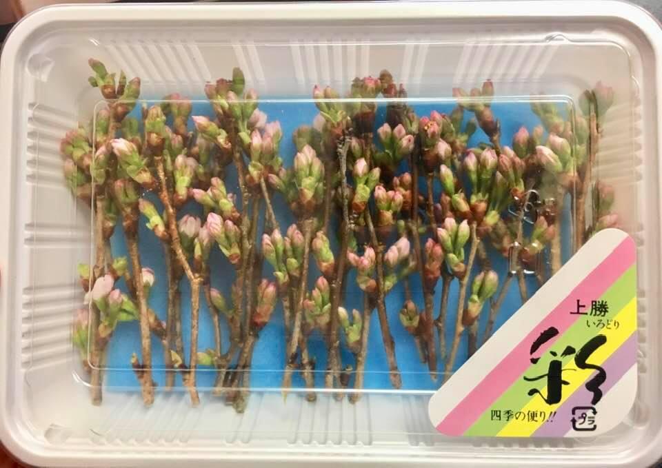敬翁桜(横詰め)