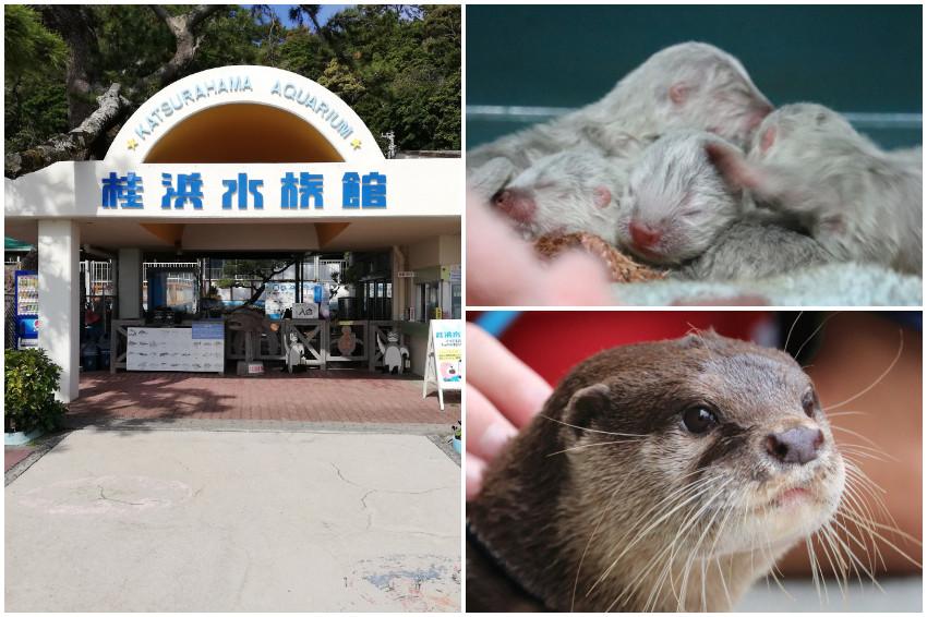 高知「桂濱水族館」帥哥飼育員成網路話題,和超萌動物明星們比吸睛!