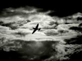 [岩田太郎]【「反日」映画『アンブロークン』を斬る 2】~機能しない米社会のヒーロー願望~