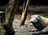 現代の恐竜島、閉鎖で大騒動