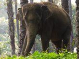 スマトラゾウ、インドネシアで死骸