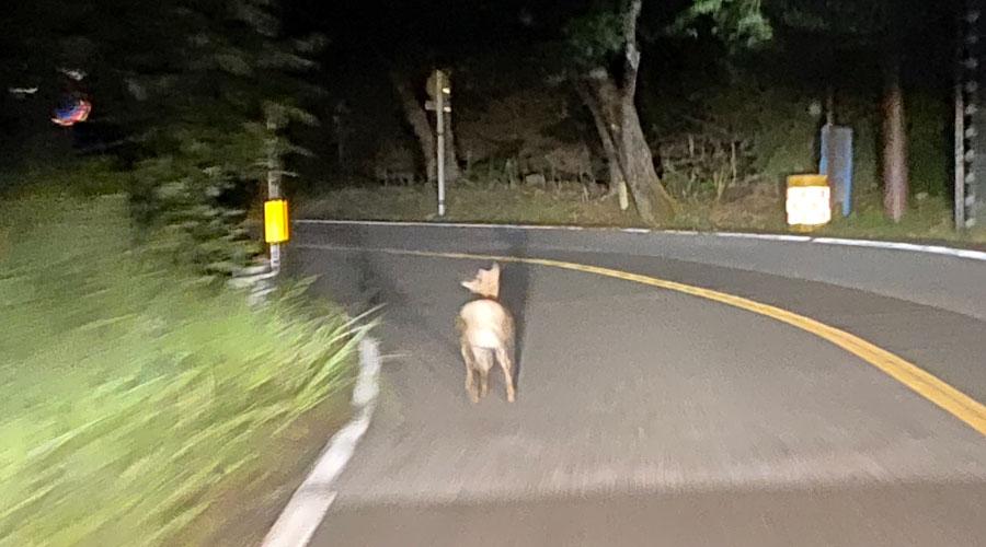 琵琶湖の鹿