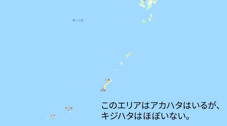 沖縄にキジハタはいない