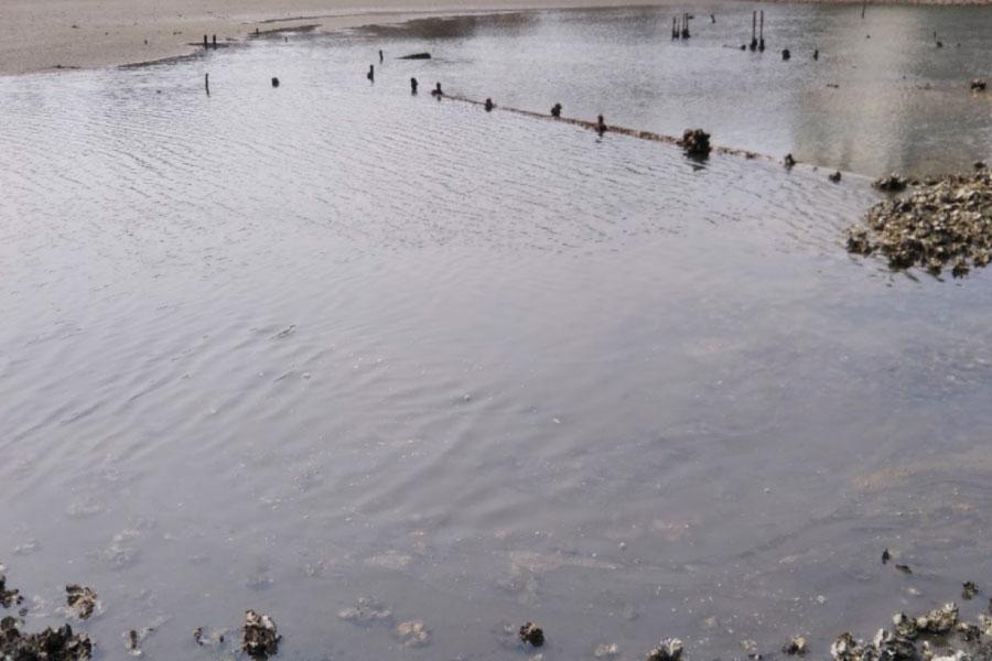 干潟での魚釣り