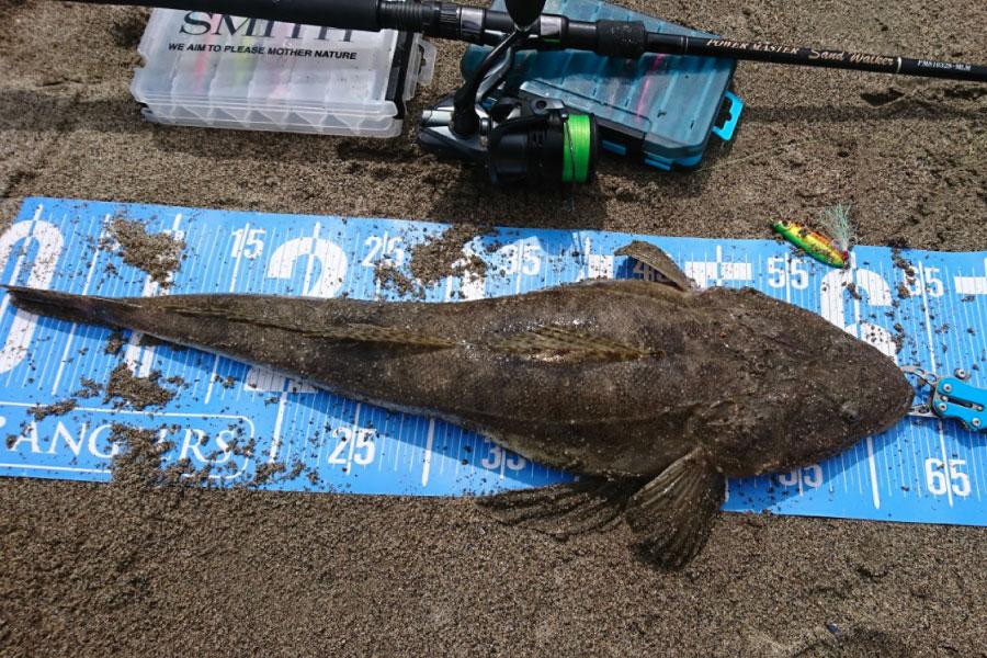 サーフで釣れるマゴチ