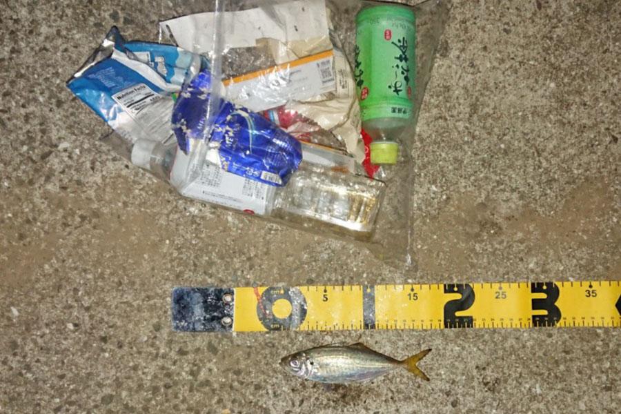 ゴミ拾い釣果2