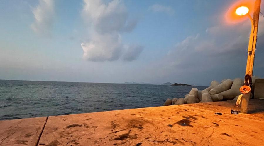 アオリイカ防波堤1