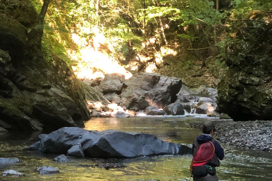 渓流のアップ