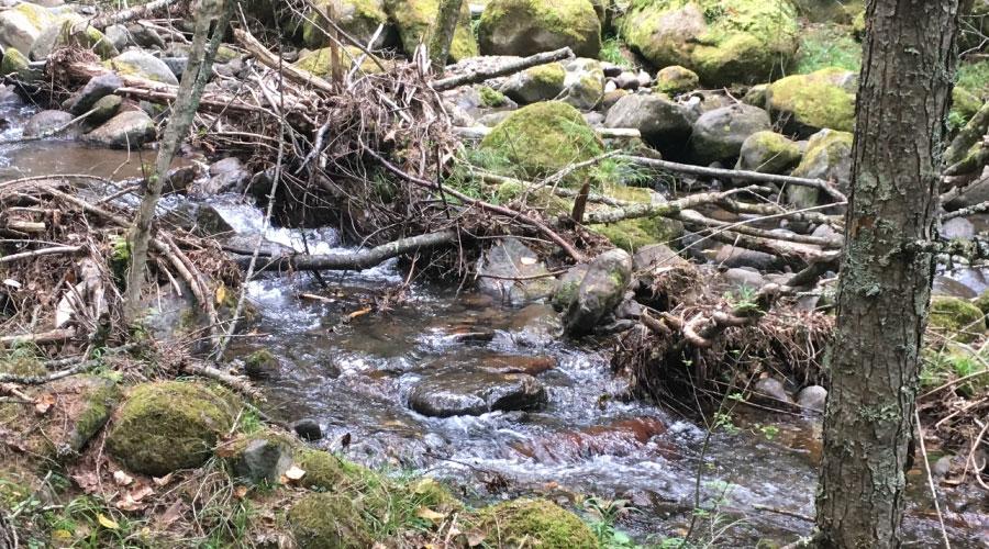 渓流でなげにくい場所