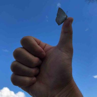 Thumb img 0743