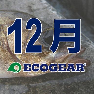 【ECOGEAR】メバルオープン 2018-2019 12月