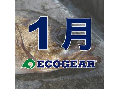 【ECOGEAR】メバルオープン 2018-2019 1月