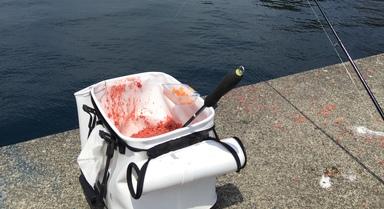 【重要】海釣りの撒き餌につきまして