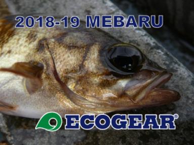 【ECOGEAR】2018-19メバルイベント開催!