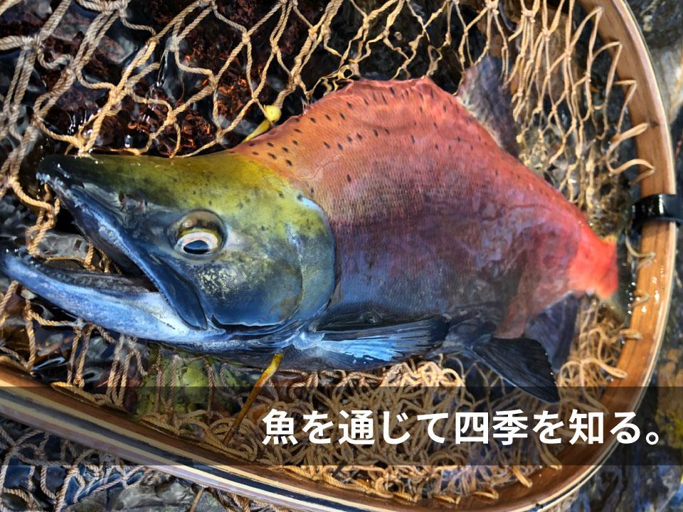 色や体型が四季によって変わる魚達。魚を通じて四季を知る。