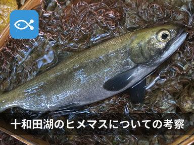 2020年度、十和田湖にヒメマスを狙いに行ってきた!【考察編】