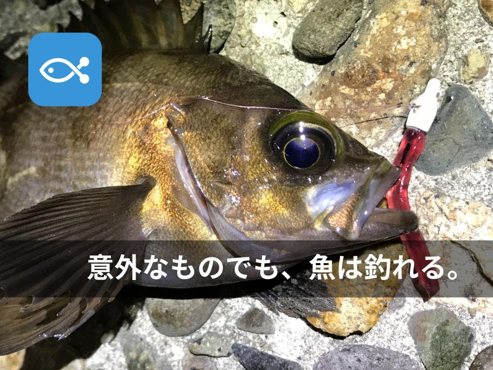 こんなもので釣りをしてみました。意外なものでも魚は釣れるんだよ。