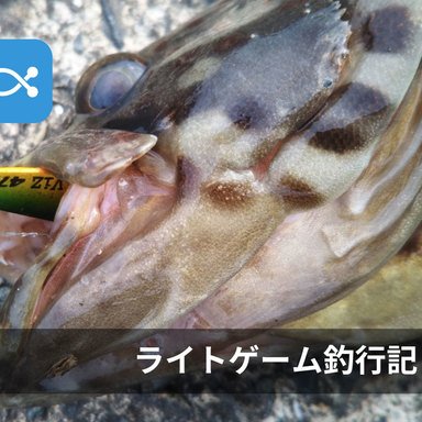 ライト太郎の釣行記〜漁港のライトゲームで高級魚『チャイロマルハタ』が釣れました〜