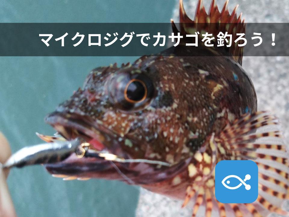 マイクロジグを使ってカサゴを釣ろう!!byライト太郎