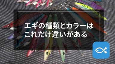 【エギング】始めたいあなたへ!エギの種類とカラーはこれだけあります。
