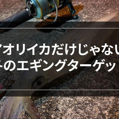【エギング】冬本番!邪道エギングで冬の絶品をゲットしよう!
