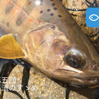 渓流のすゝめ⑤、釣れる魚はこれだ